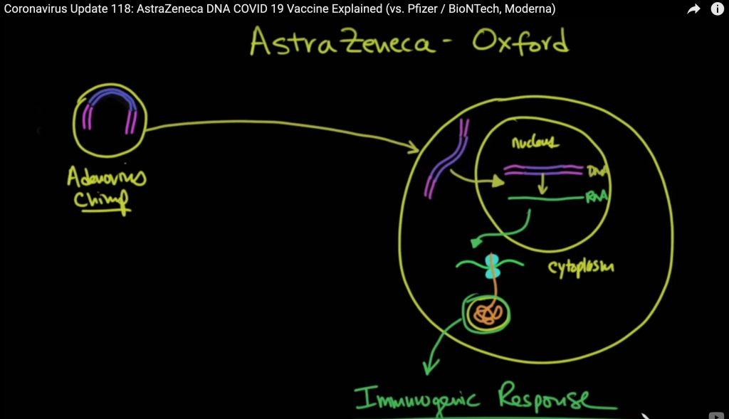 How the AstraZeneca Covid 19 Vaccine Works https://youtu.be/GOq8-FR8s1E?t=151
